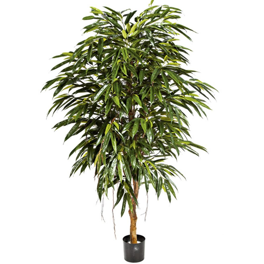 Longifolia taller de las indias - Taller de las indias ...